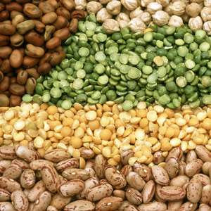 Legumes and Legume Products